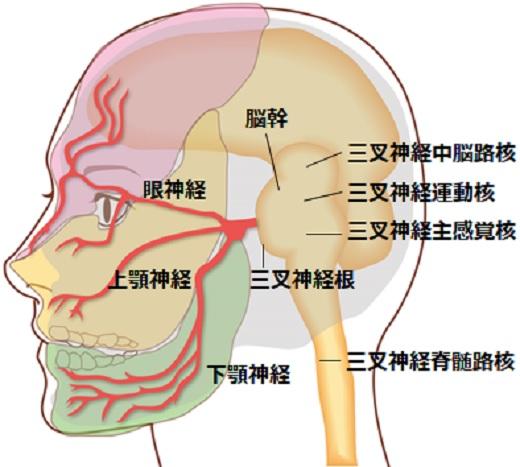 三叉神経画像